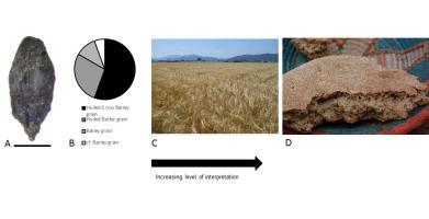 Agendas for Archaeobotany in the 21st Century: data ...